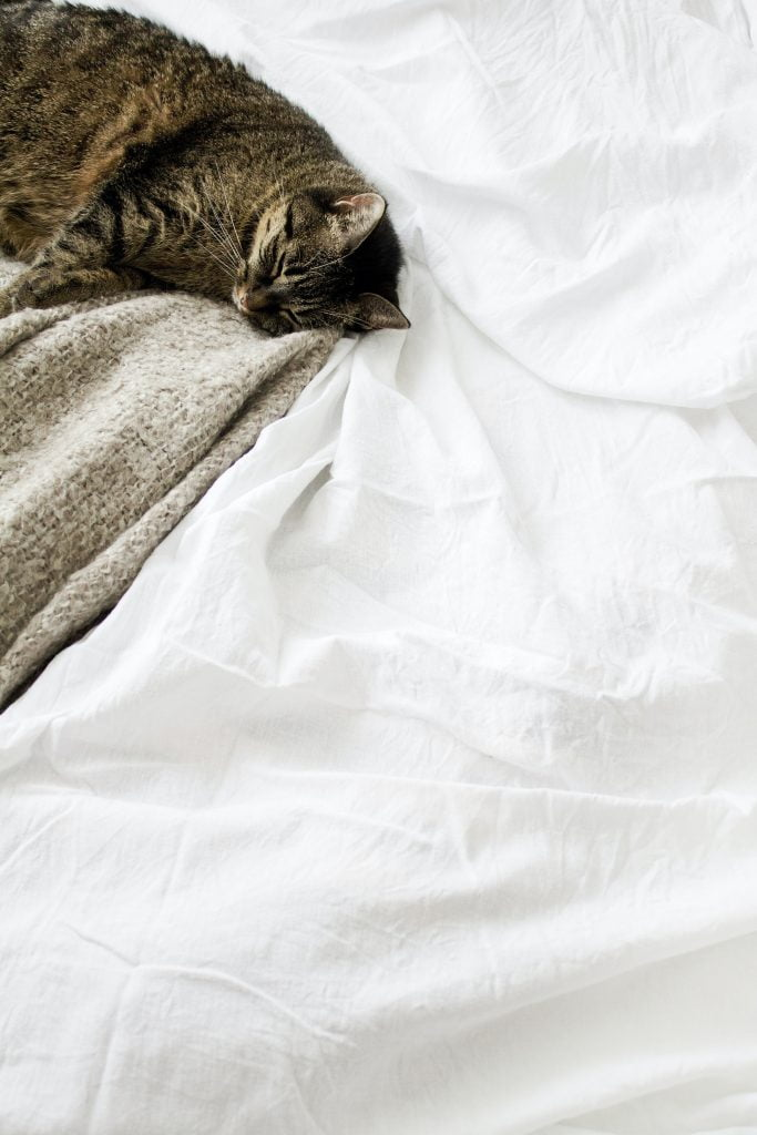 Cat on bed sheets