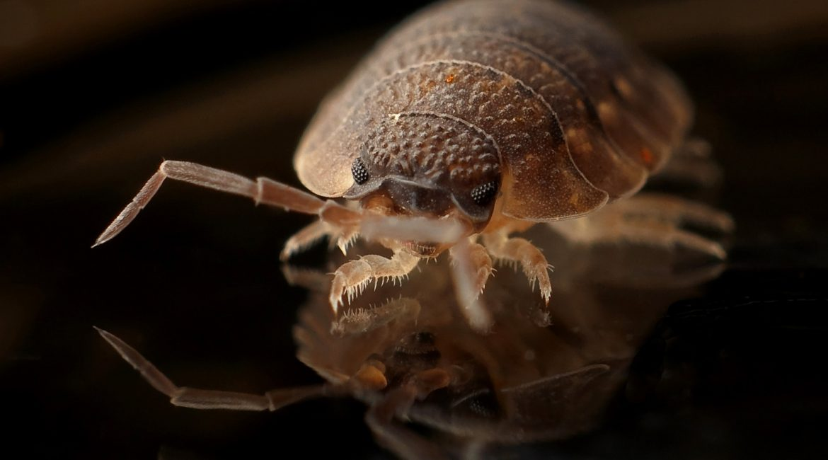 Can Bed Bugs infest your air mattress? Let's find out